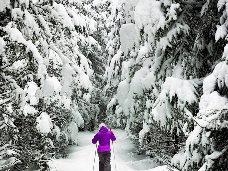 Forest Skiing in Lapland